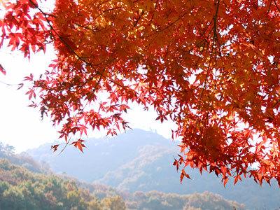栃木県足利市の大岩山の紅葉