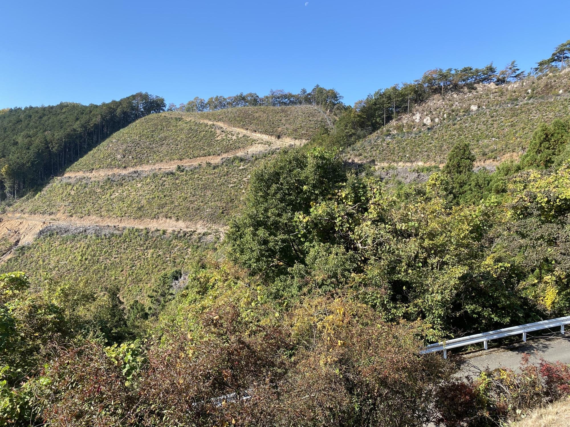 大岩山毘沙門天の西公園から植林斜面の眺め