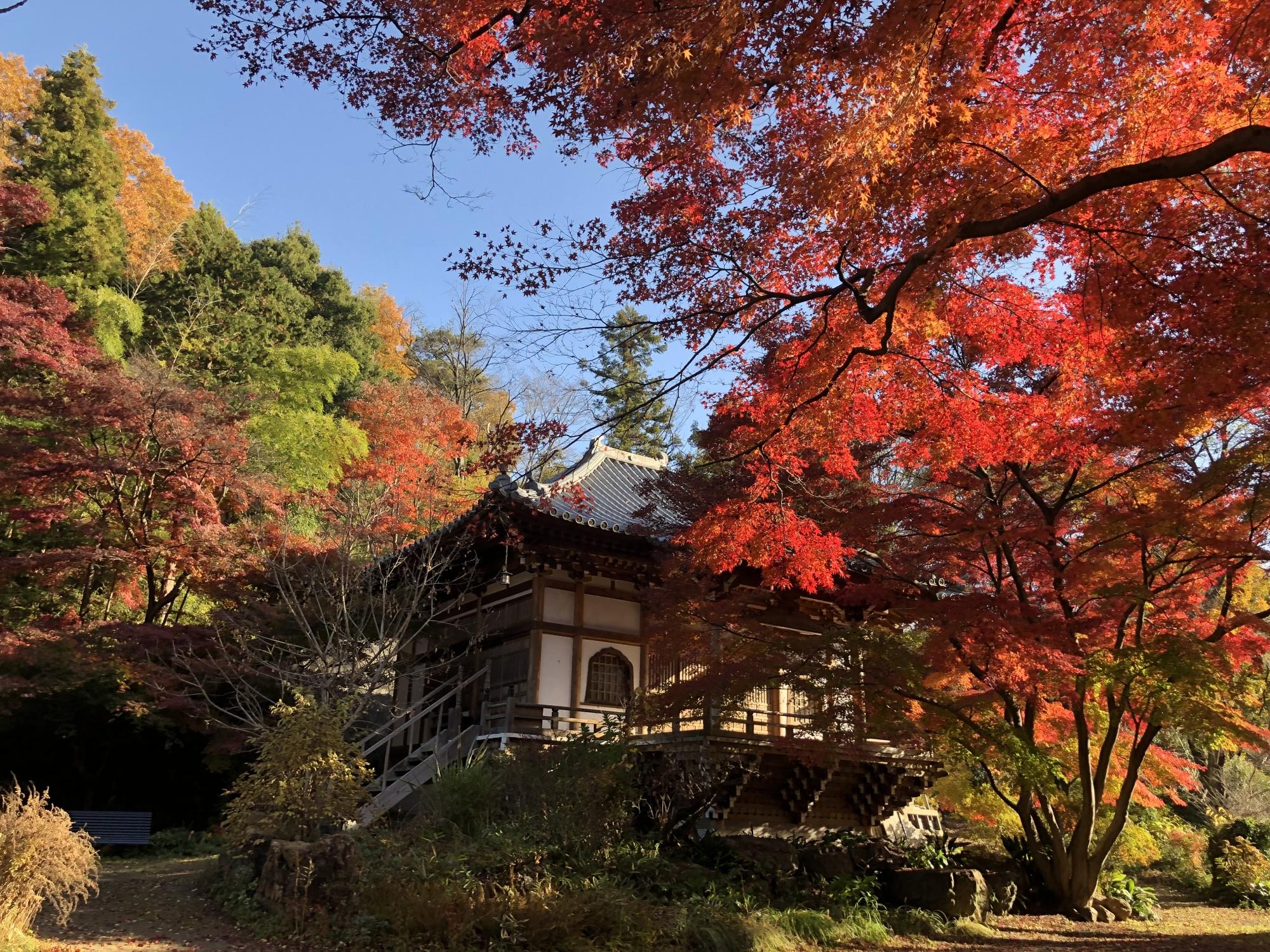 大岩山多聞院最勝寺本坊の本堂の秋の紅葉写真