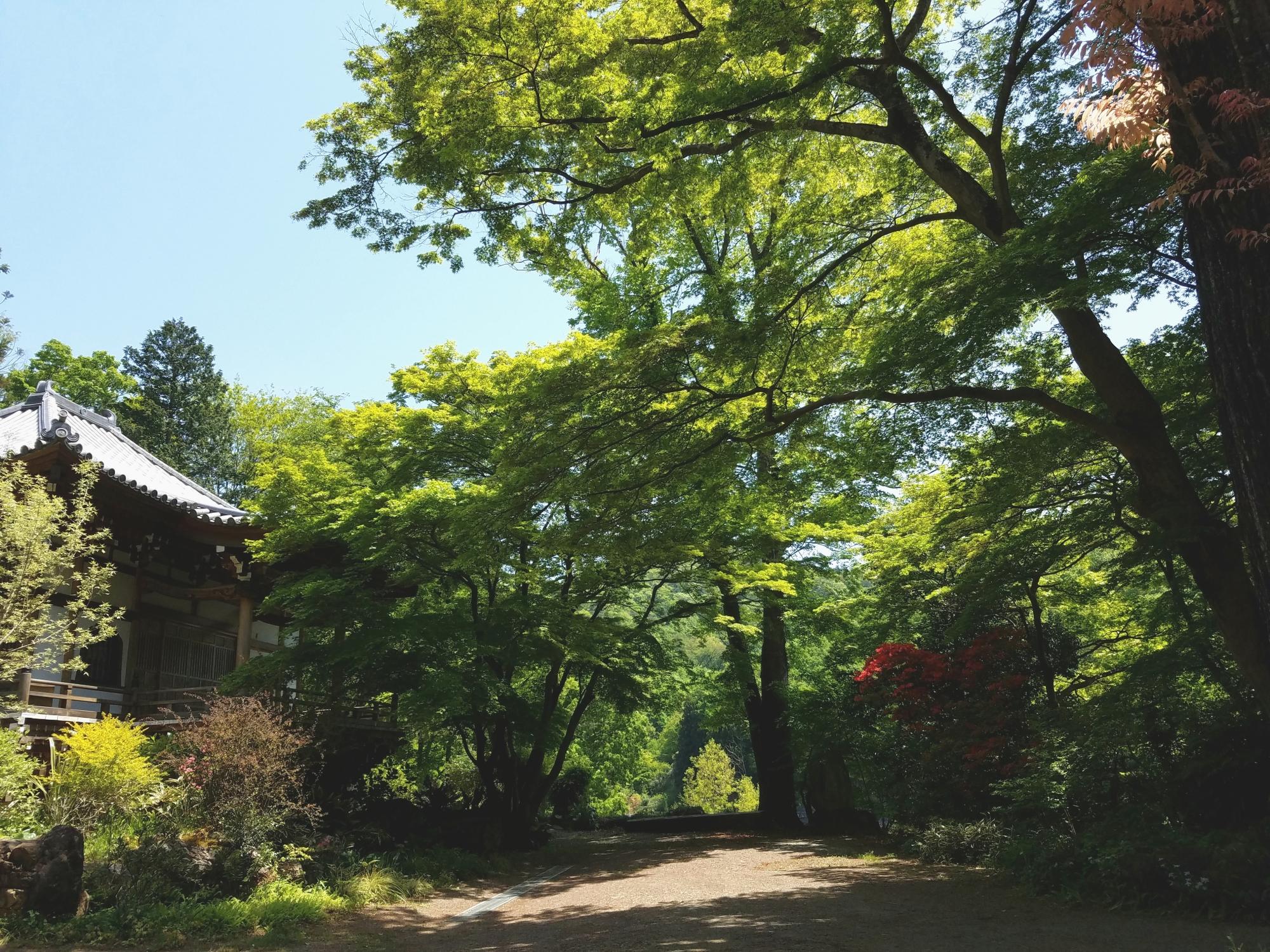 大岩山多聞院最勝寺本坊の本堂の夏の写真