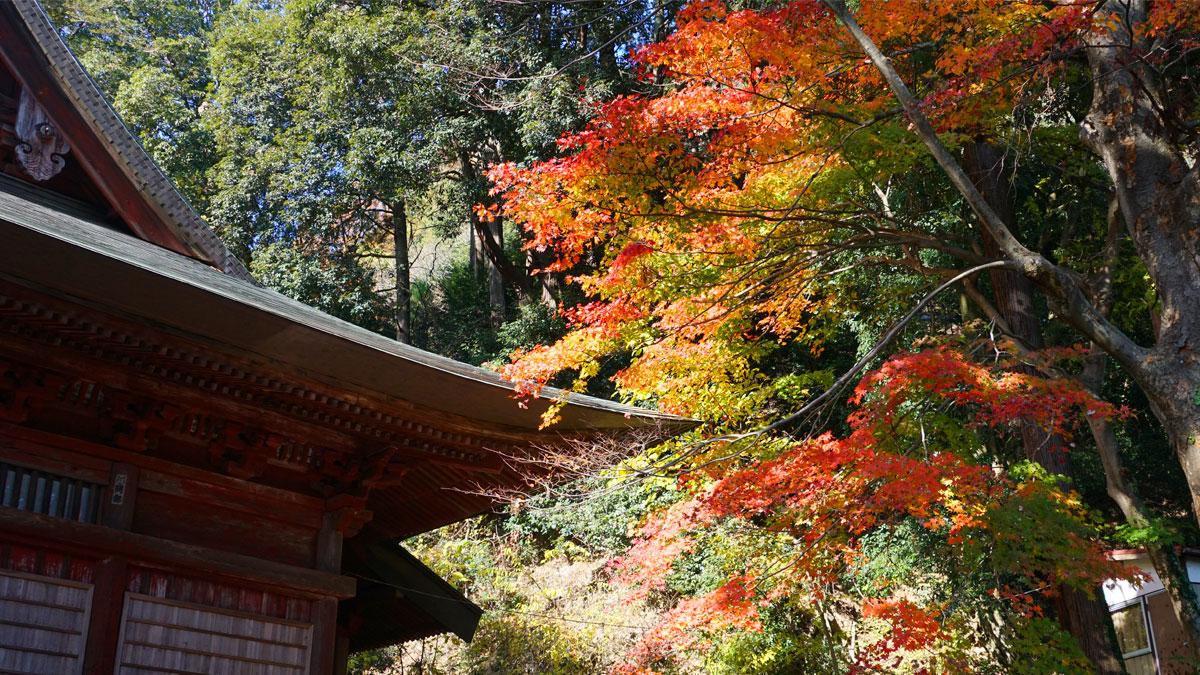 大岩山毘沙門天本堂東側の紅葉風景写真