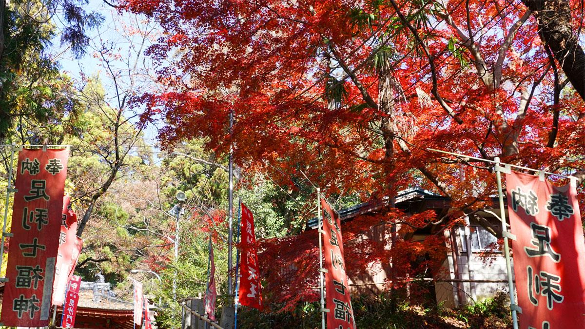 大岩山毘沙門天本石段付近の紅葉風景写真