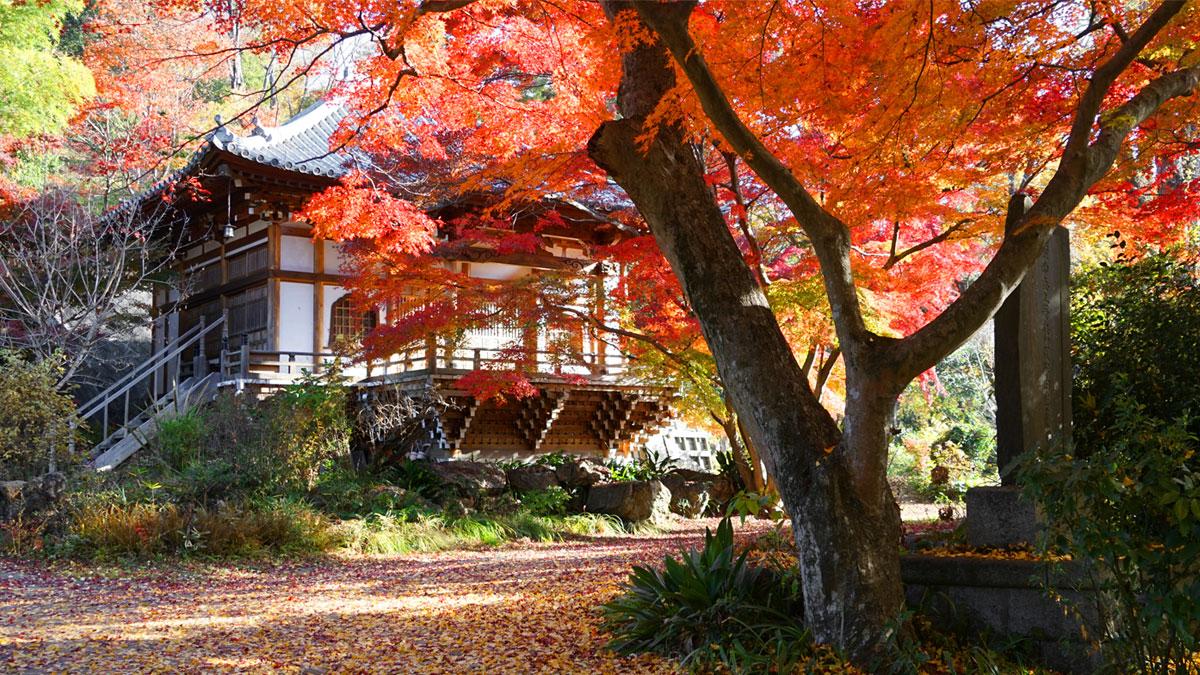 最勝寺本堂右斜め前の紅葉写真