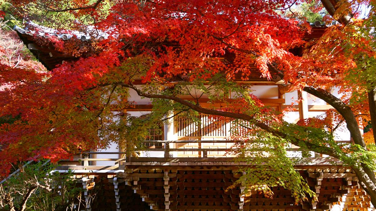最勝寺本堂正面からの紅葉写真