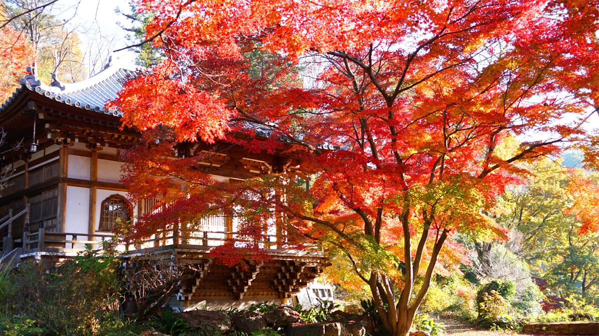 最勝寺本堂南西側からの紅葉写真