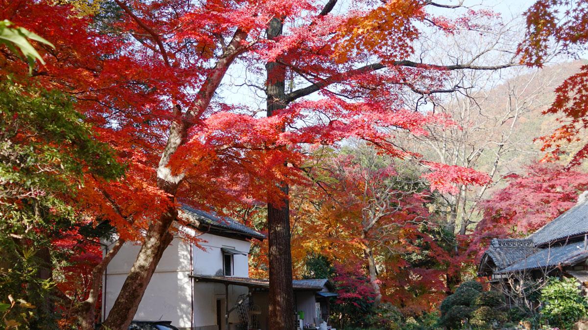 最勝寺境内中央からの紅葉写真