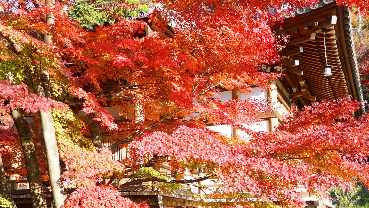 最勝寺本堂南東側からの紅葉写真