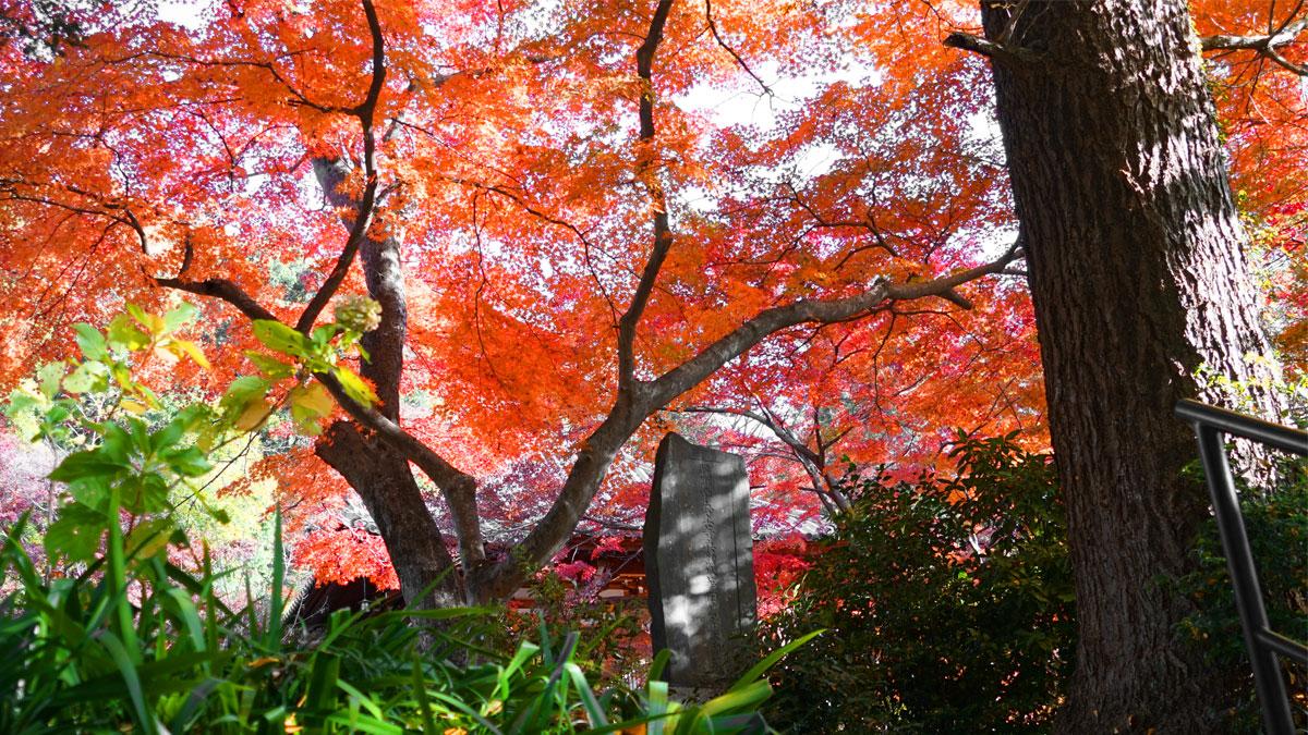 最勝寺の境内中央から石碑と紅葉の写真